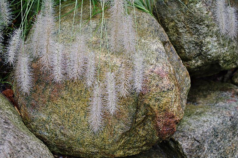 Grass on Granite