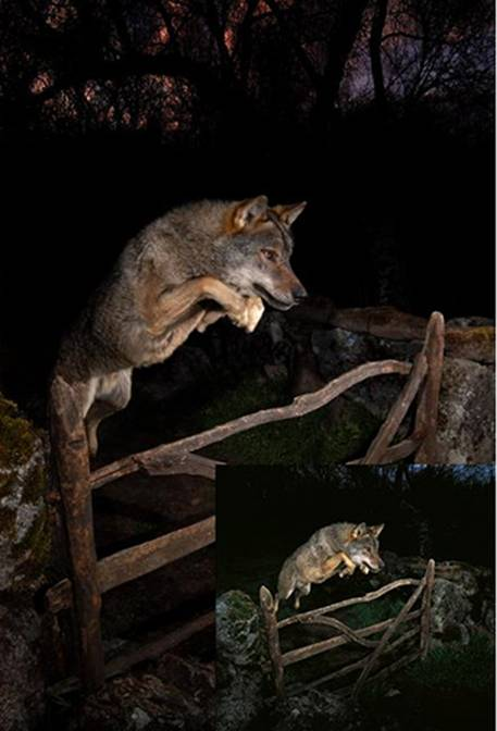 Twowolfpics