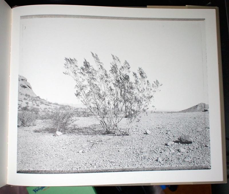 Klettcreosotebush