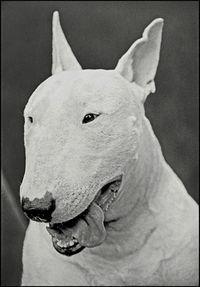 Bobthedog