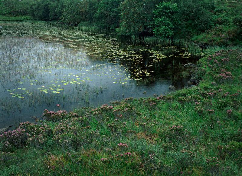 CteinSwamp-800