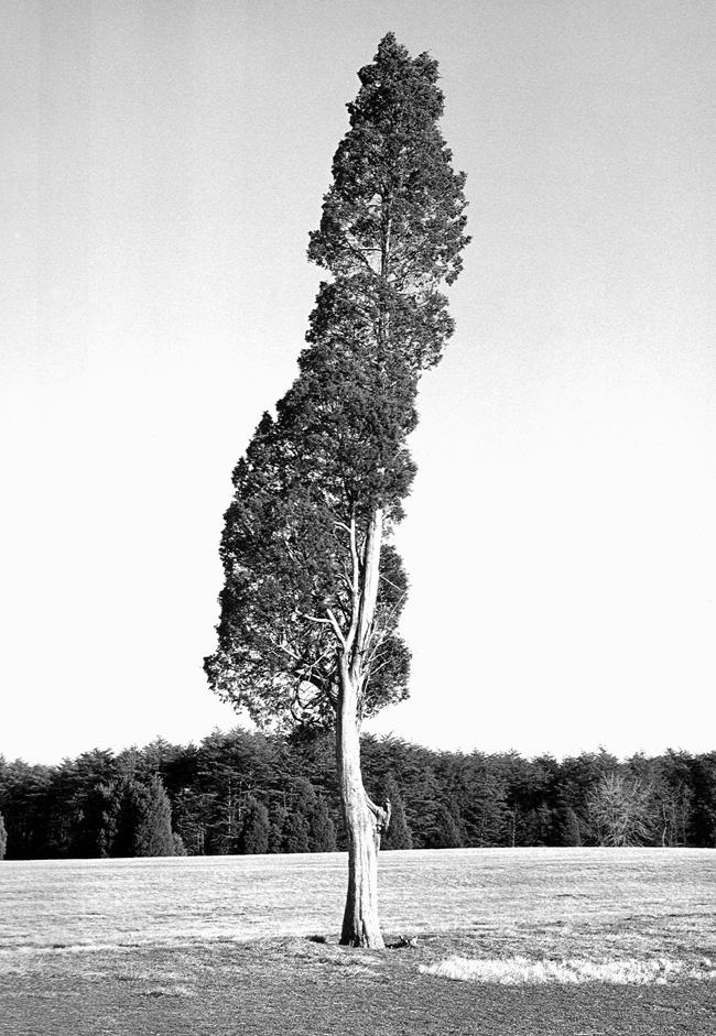 Treesmall