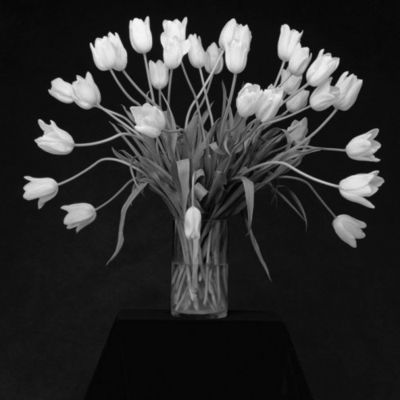 Mapplethorpetulips