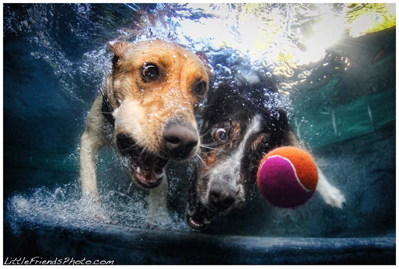 Casteelunderwaterdogs