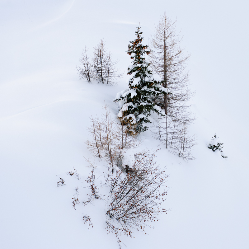 HLkazi-snowtrees