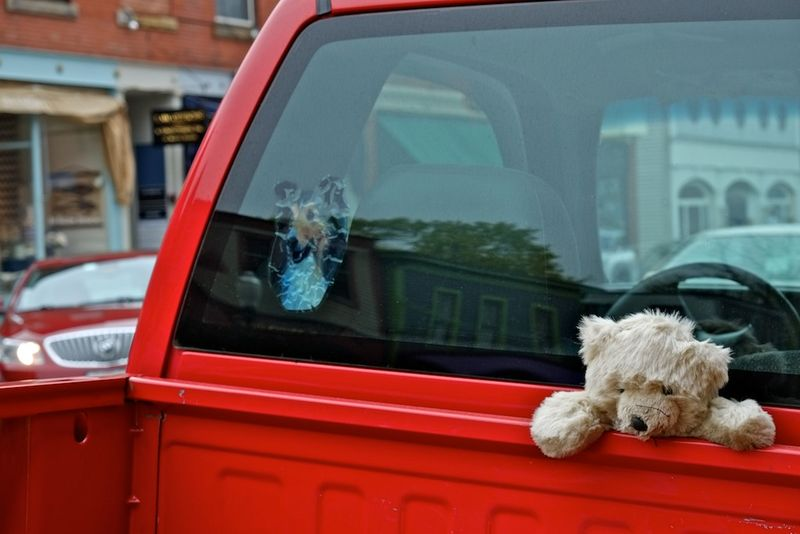 A dog & a bear in a truck