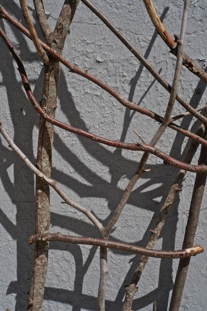 Trellis of Twigs