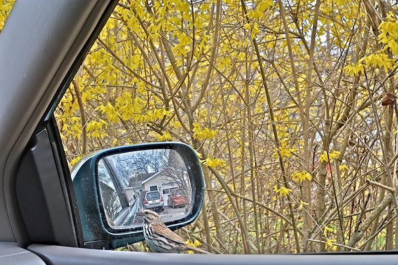 Bird Approaches - by Jim Hughes