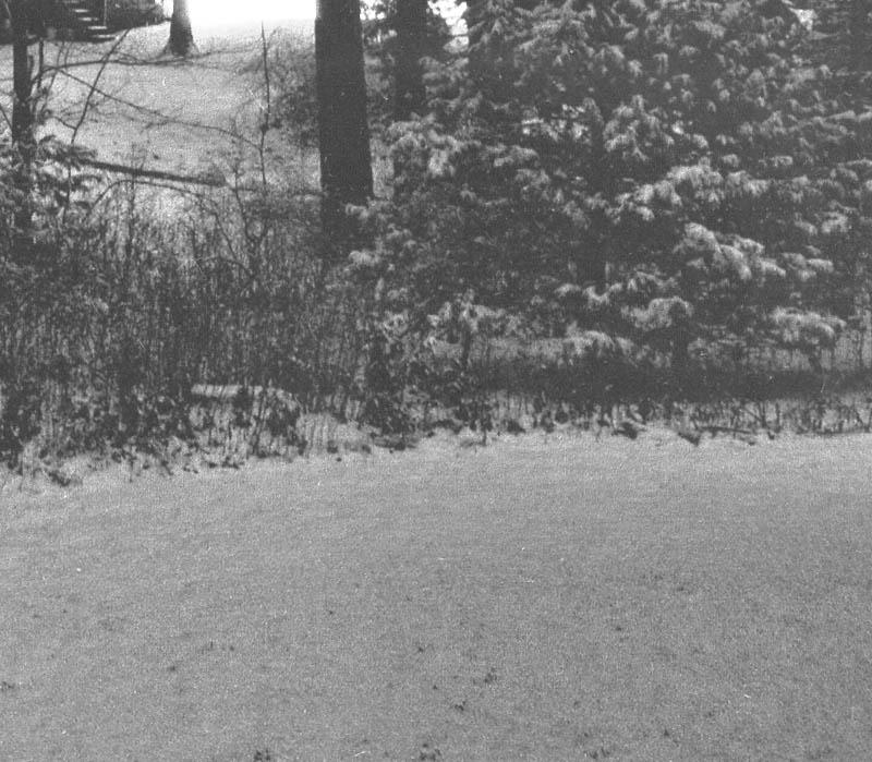 Snow3880