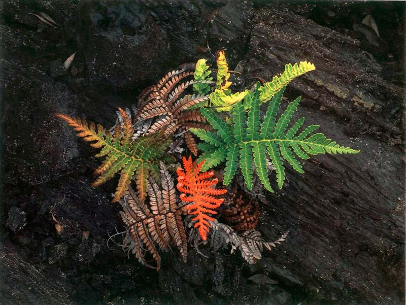 Competing Ferns small