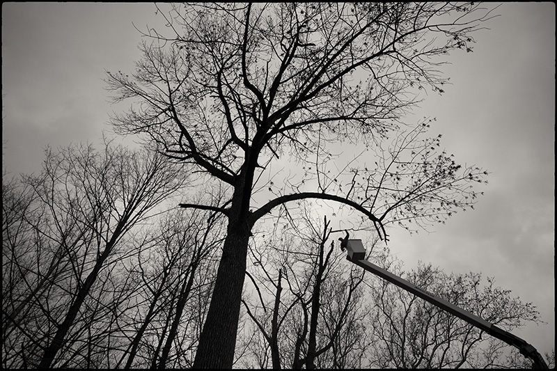 Tree-felling-3-BW-small