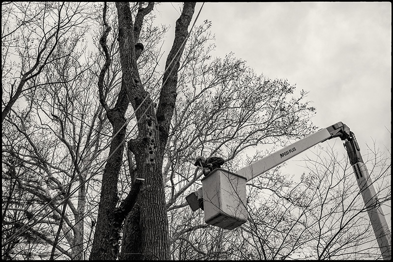 Tree-felling-6-BW-small