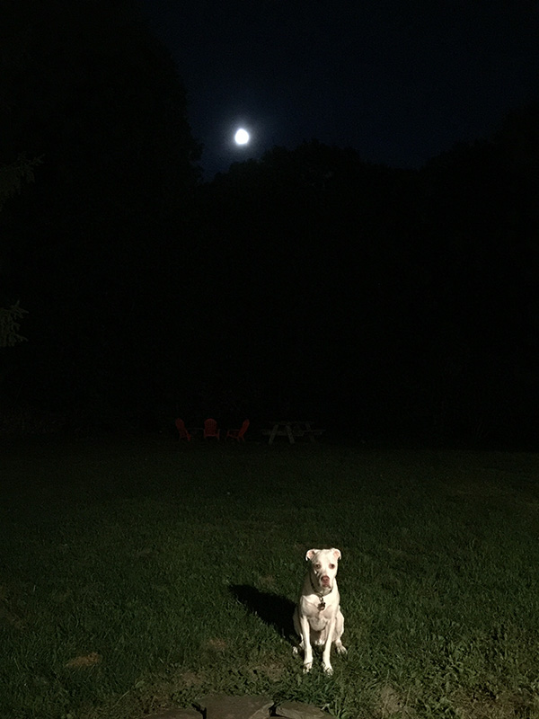 Butters and the moon-2