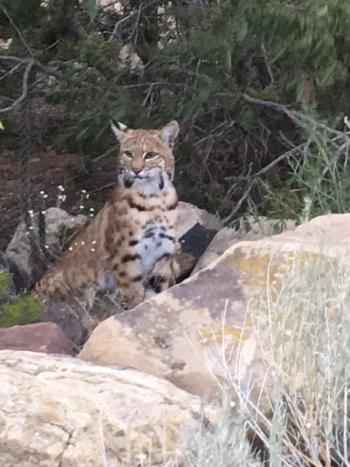 Camp Bobcat