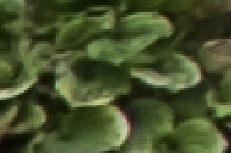 Pixellated-leaves-1