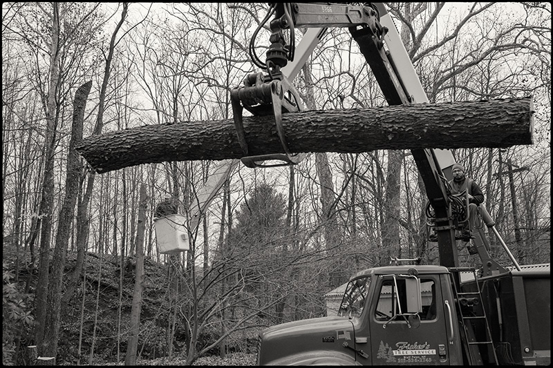 Tree-felling-2-BW-small