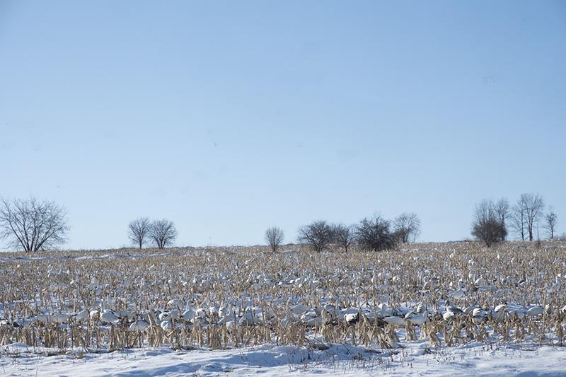 Snowy field small