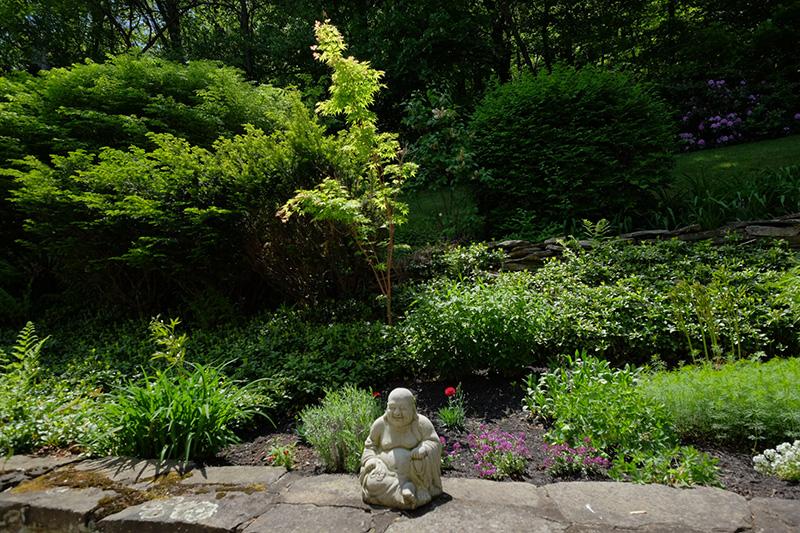 Buddhaandmaple