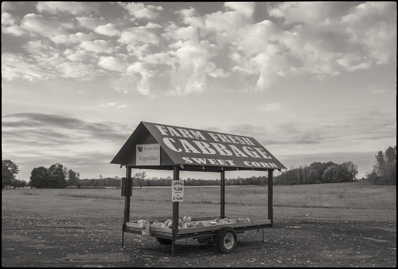 Cabbage-BW-small