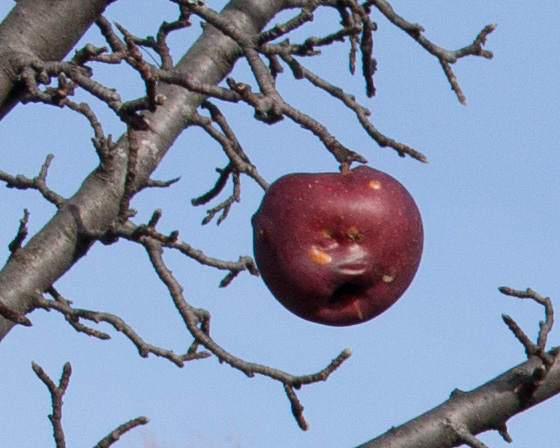 Orchard-detail