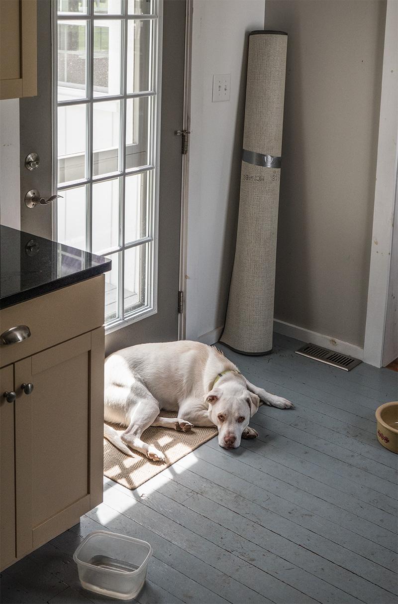 Dogbert-small