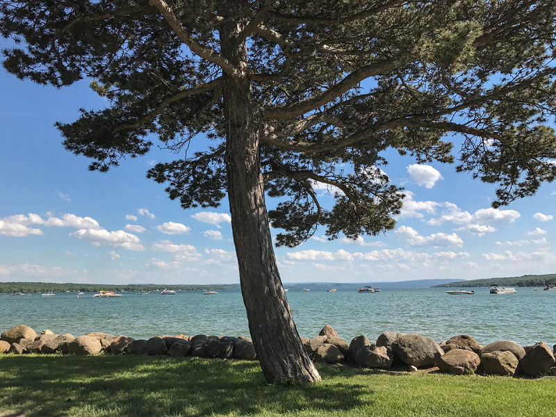 Pineconetree-small