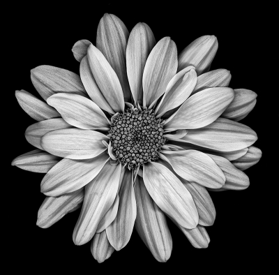 BW Bagno Joe's Flower