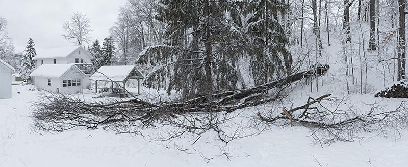 Fallen oak small