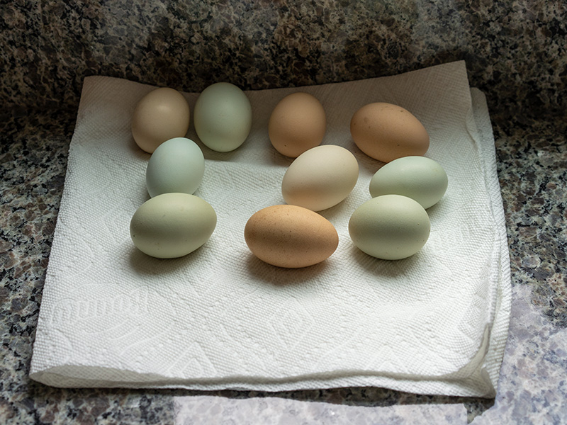 Dave Standish's Eggs