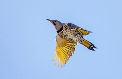 BDyellow Marshall Smith NorthernFlicker06Jan2018
