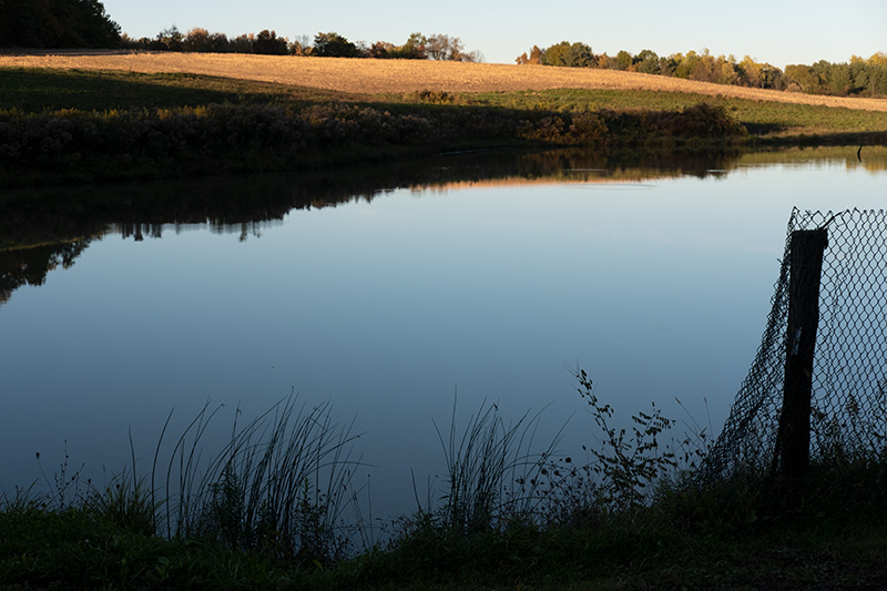 Still pond 2
