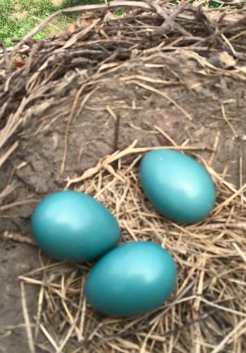 Abandoned eggs