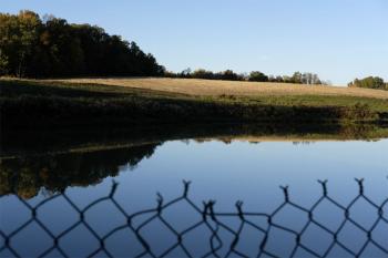 Still pond 4