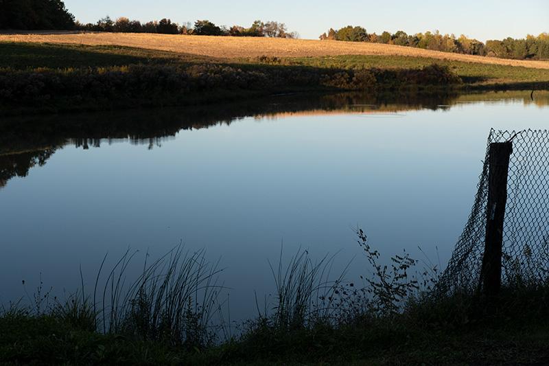 Still pond 2