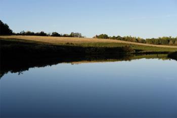 Still pond 3
