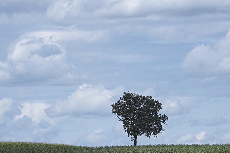 Lone tree-small