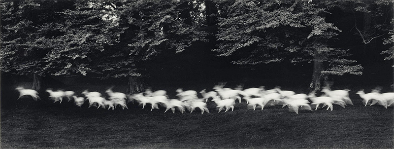 Caponigro deer