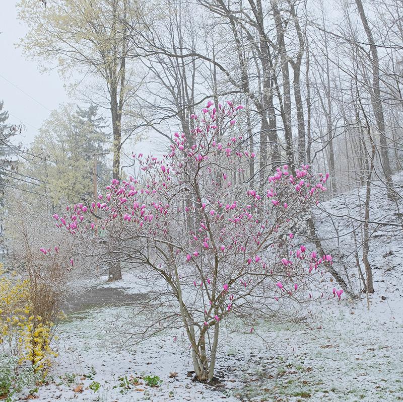 April Snow-small