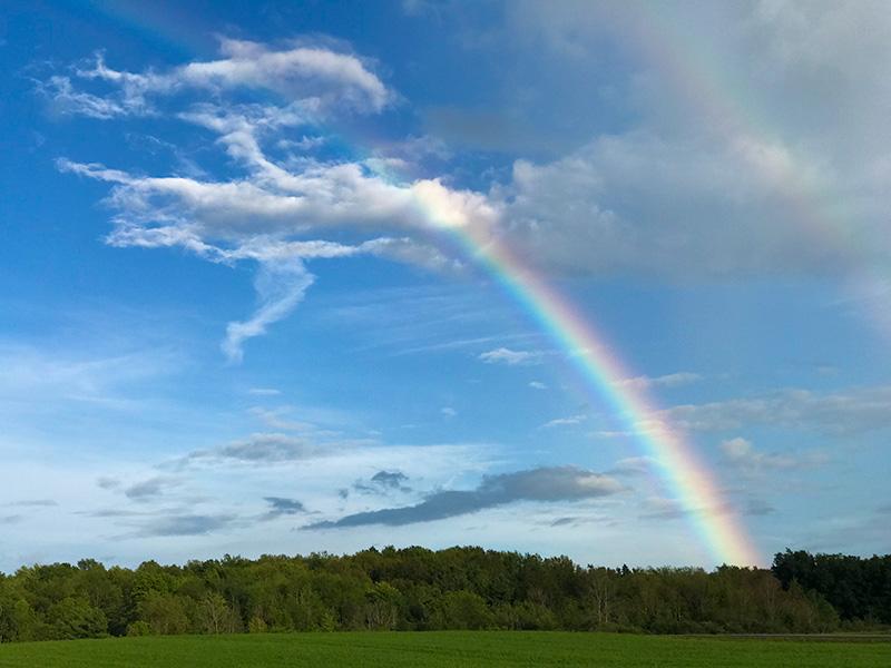 Rainbow-small
