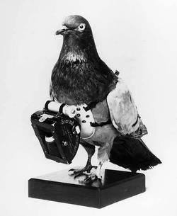 Pigeoncamera1