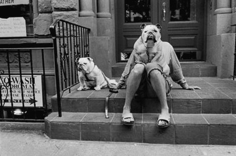 Erwittbulldoggie