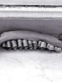 Lehetjawbone