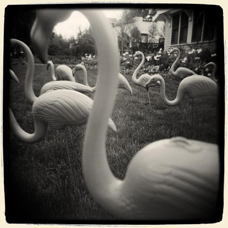 Rholmgren_flamingos600x600