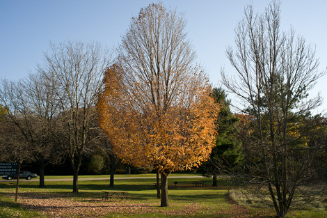 Halfleavedtreesmall